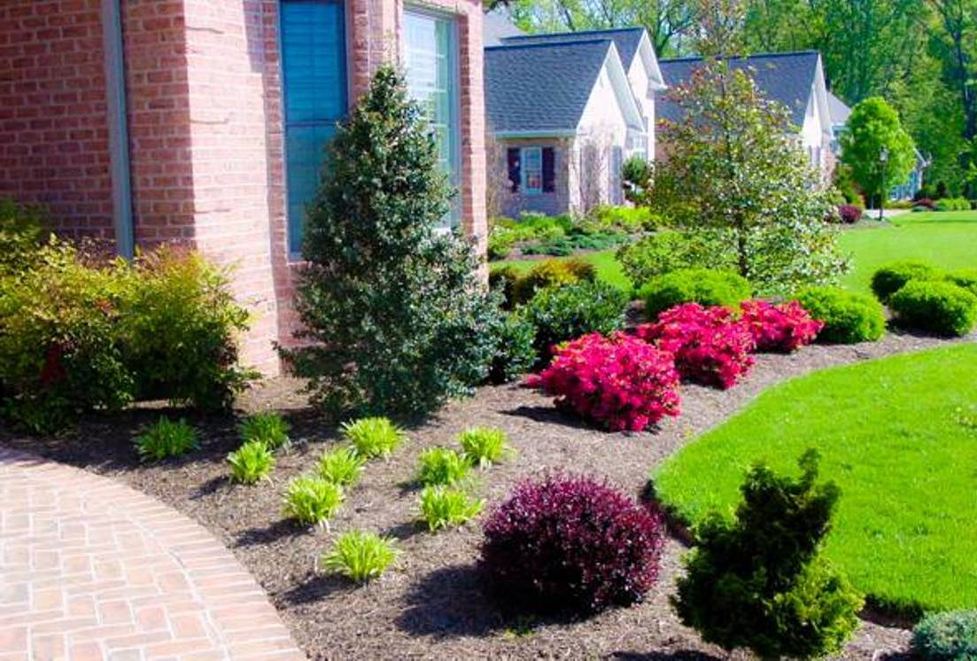 Front Lawn Plant Ideas Of How To Get Your New Home Summer Ready